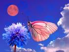 Papillon de nuit - Claudia MEYER