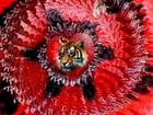 Coeur de lion , oups de tigre ... - Jean-louis BARTHELMEBS