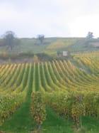 Automne dans les vignes - Manola RIMBERT