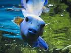 Aquarium de saint malo 003 par Jean-claude GUILLAUME sur L'Internaute