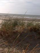 Oyats dans les dunes - Marie-Christine JACQUES
