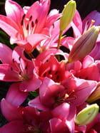 Bouquet de lys - Suzanne DUFOUR