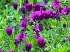 Fleurs de mai par David LE SOLLIEC sur L'Internaute
