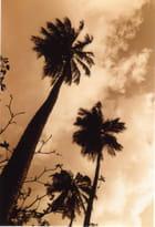 Paradisiaque - Vincent MECHIN