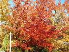 Les couleurs de l'automne - Alain TREMBLAY