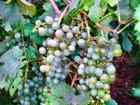 Fruit d'automne par Nicole LE CAM sur L'Internaute