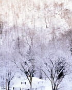 Arbres en neige - Monique ORTEGA