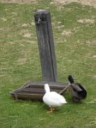 Deux canards chez disney -