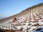 Vignes sous la neige - Marie Bouteille