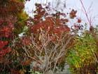 Bourgeons de magnolia - Jean luc DEMISSY