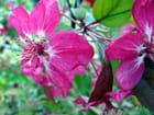Fleurs de prunus - Catherine DE RODAYS