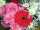 Bouquet 3 - Claude RENOUF
