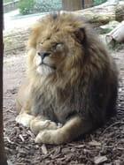 Le roi lion - Nathalie BAUDOIN