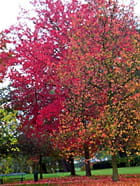 Rouge d'automne - Yannick BLANCHARD