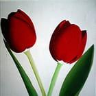Les tulipes rouges -