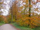 Image d'automne - ginette prévot