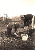 Les pommes de terre - Paul HELLA