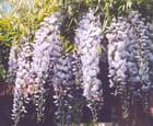 Grappe de fleur par Chantal VORST sur L'Internaute