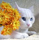 Chat dans fleurs. - Daveen-alexande WINGROVE