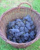 Les vins d'ile de france - Gérard ROBERT