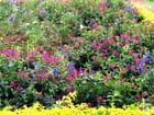 Parterre de fleurs par Jean-pierre MARRO sur L'Internaute