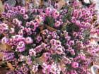 Automne au jardin ... - Jocelyne THOMAS-B
