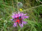 Fleur et papillon - Pierre HUCK