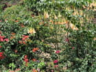 Parterre de fleurs - Jean-pierre MARRO