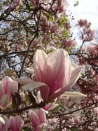 Magnolia for ever - Sandrine KLEITZ