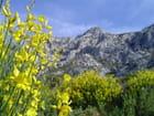 Montagne sainte-Victoire - Pierre ALBERT