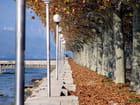 Promenade automnale - Gilles DEDIEU