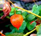 Dernier fruit avant le froid... - Eric COMANDINI