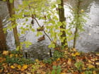 Reveil de canard en automne - Annie CHICOT