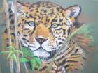 Le jaguar par Valérie FASSIER sur L'Internaute