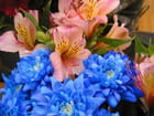Bleu et rose - Jean-pierre MARRO