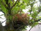 Casimir sur son arbre - Michèle SEIGNOUREU