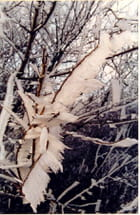 Parure d'hiver - Sonia CUNGS
