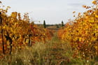 La vigne en automne par Lucien DORLET sur L'Internaute