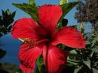 Fleur des îles par Dominique LEONARDI sur L'Internaute