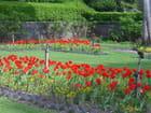 Rouge tulipe - Catherine FANER