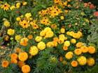 Parterre de fleurs - Nelly DROUET