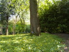 Au pied de mon arbre (air connu) - Patrick DELEVOY