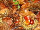 Fruits d'automne. - Jean paul CANO