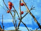 Fruits d'hiver - Danouche GUÉRARD