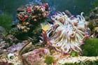 Fleurs de mer par Jeannette FAUSSABRY sur L'Internaute