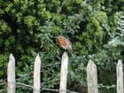 L'oiseau gourmand - Jean-christian CASA