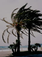 Palmier en hiver - Sylvie MATHIEU