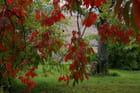 Rouge d'automne - Sylvie COMBACAU