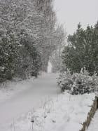 Neige de janvier - Claude MONTAGNÉ