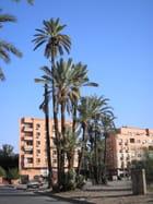 Palmiers dattiers de Marrakech - abdelhaq zegzouti